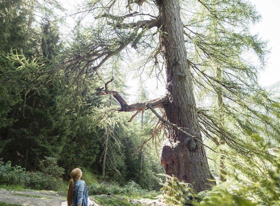 Frau_blick_auf_Baum